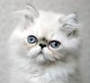 terracotta_cats userpic