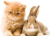 rabbit-cat_orange