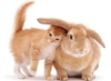 rabbit-cat_orange_2