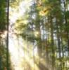 harnt userpic