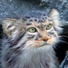 leopardochka userpic