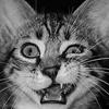 Njaalkeme: wtf cat