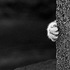 kitty - paw
