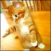 кот, кошечка, котик, котенок, пусик
