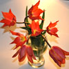 Ирина: тюльпаны