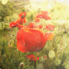 aellaya userpic