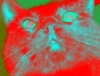 gato_rojo