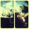 alllyyson userpic