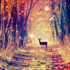 Kristin: Autumn » Deer/Trees
