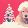 Kristin: Christmas » Puppy/Tree
