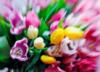 весна