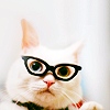 ★ m i c h i ★: stock {geeky cat}