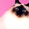 pardon meow
