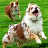 Jeni, Kai, dog agility, clicker tricks, Hanna