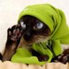 кот в платочке