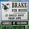 kaz? bonne?: spn - moose