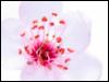 bluedragongurl userpic