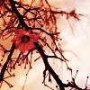 Na - Winter blossom
