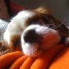 sleepy puppy, charlie
