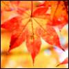 tokyo_maple