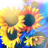 {STOCK}✿ sunflowers!