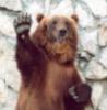 Heil-bear