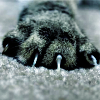 alligator138: Claws