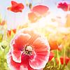 Kristin: Spring » Pink Flowers