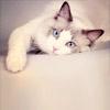 Kristin: Stock » Cat