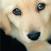 Kristin: Stock » Puppy