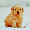 Kristin: Winter » Puppy in Snow