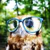 Nerdy owl is nerdy