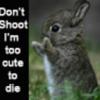 bunny, shoot
