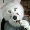 Fursuit - Cookie