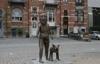бельгия, мужчина с собакой