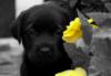 Puppy dog & Flowers