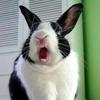 Killer bunneh!