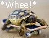 onceiwasaturtle userpic