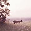 milksalt userpic