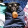 porpurina: baby bat