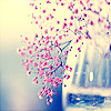 Synchrony: flowers