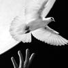 nikolat3sla: george the pigeon