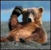 Медведь88