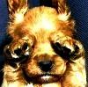 mutetrickster userpic