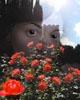 seven_ravens userpic