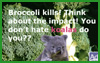 Expresso Maniac: Don't kill koalas!!