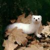 lasochka71 userpic