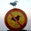 Lina: seagull