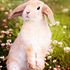 Laurie: bunny