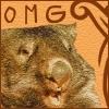 macey muse: omg wombat!